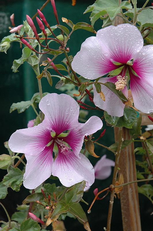 Garden Centre Mallow Garden Ftempo